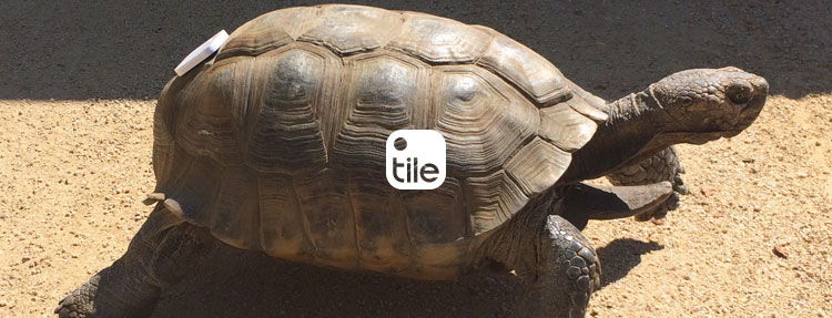 Tile Can Be A Pet Locator For Turtles